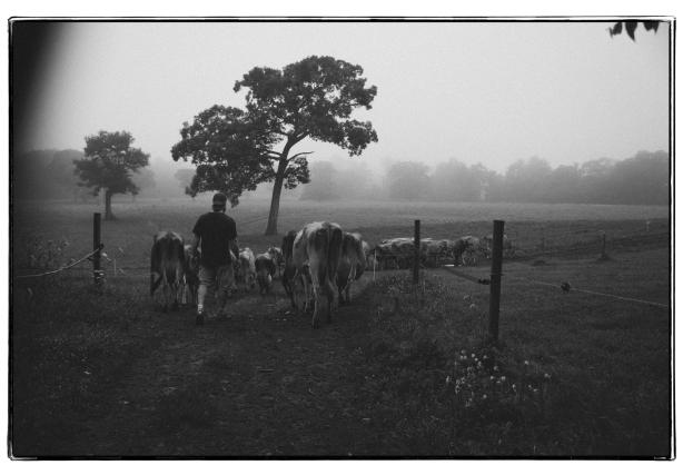 cows_6673_deb